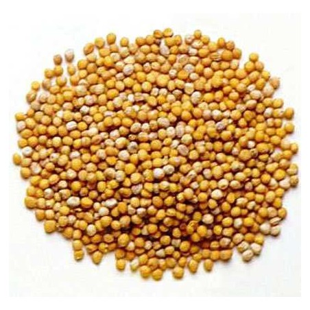 MOUTARDE GRAINS 1 KG
